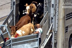 EU_animal_exports_Croatia-1