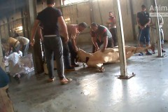 EU_animal_exports_Egypt1