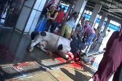 EU_animal_exports_Egypt2