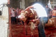 EU_animal_exports_Gaza1