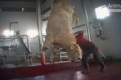 EU_animal_exports_Turkey3